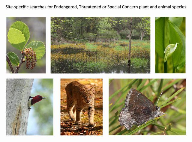 Rare species surveys.jpg